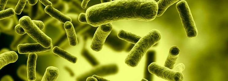 bakterierfokus