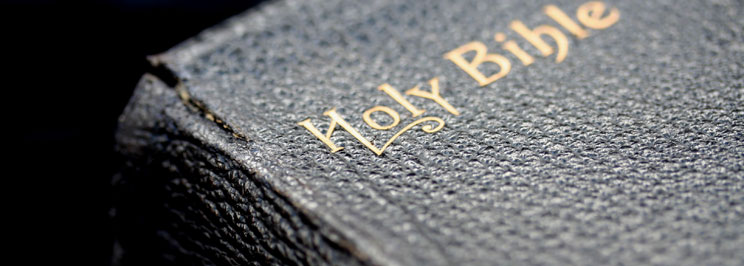 bibelnfokus