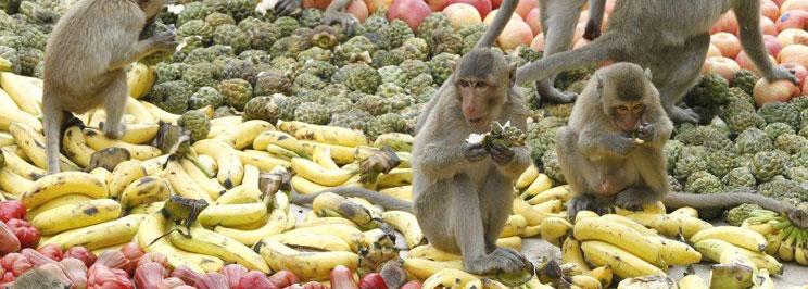 monkey-buffet-festival-frui