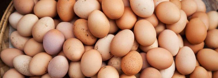 omega-3-eggs