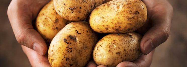 potatisfokus