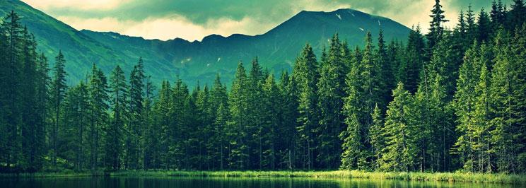 skogfokus