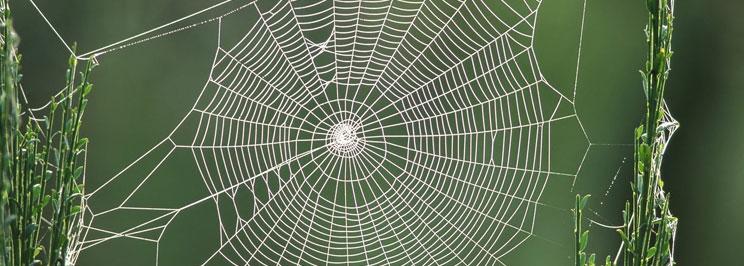 spindlar1