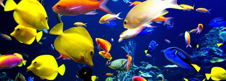 fiskarfokus