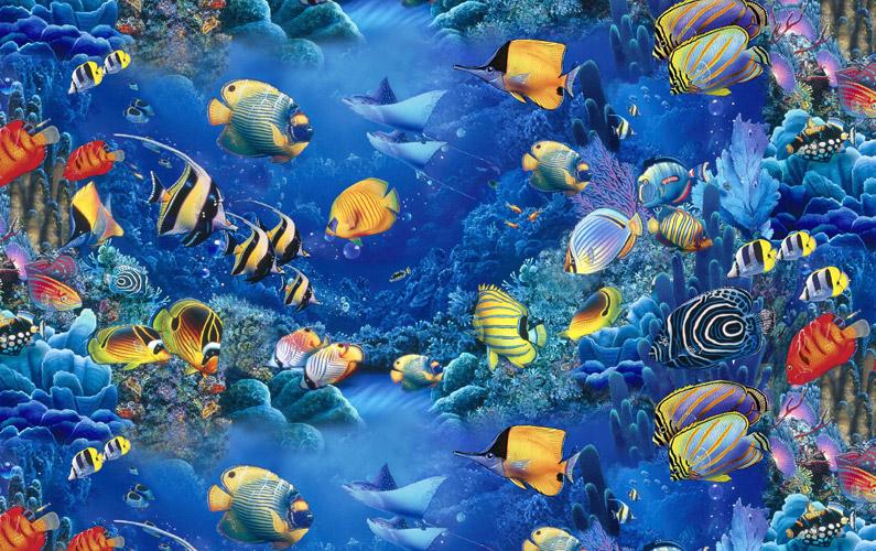 10 fakta du antagligen inte visste om fiskar