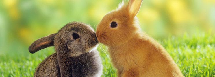 info om kaniner