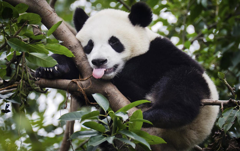 10 fakta du antagligen inte visste om pandor