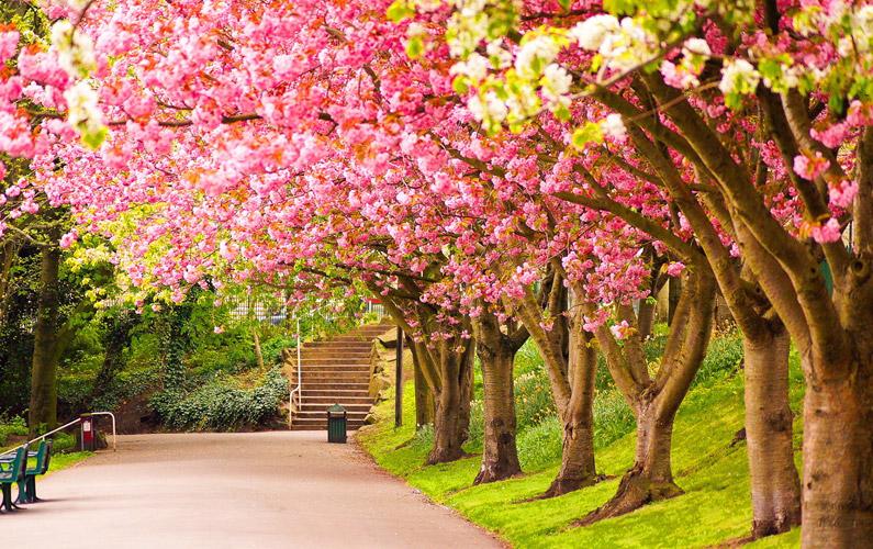 10 fakta du antagligen inte visste om våren