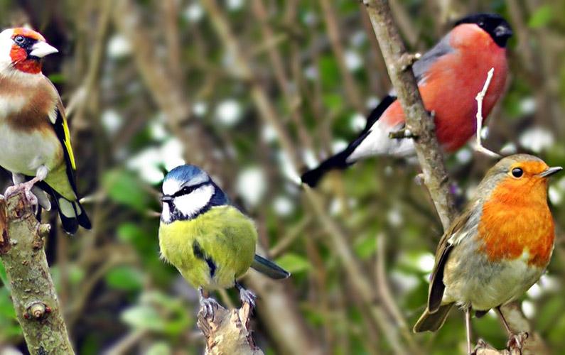 10 fakta du antagligen inte visste om fåglar