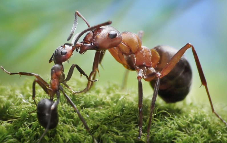 10 fakta du antagligen inte visste om myror
