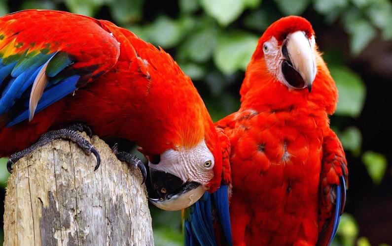 10 fakta du antagligen inte visste om papegojor