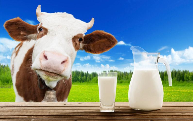10 fakta du antagligen inte visste om mjölk