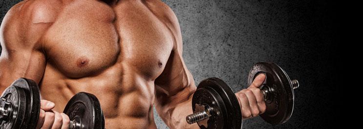 muskler1