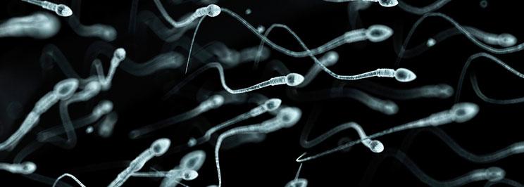 spermafokus
