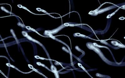 10 fakta du antagligen inte visste om spermier