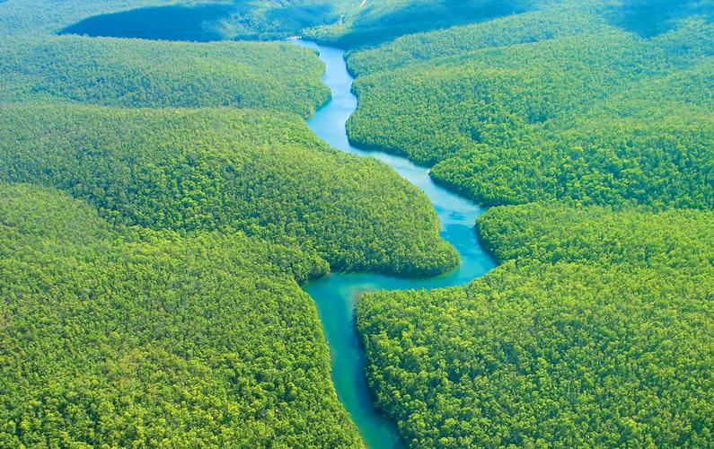 10 fakta du antagligen inte visste om Amazonas regnskog