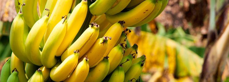bananer1