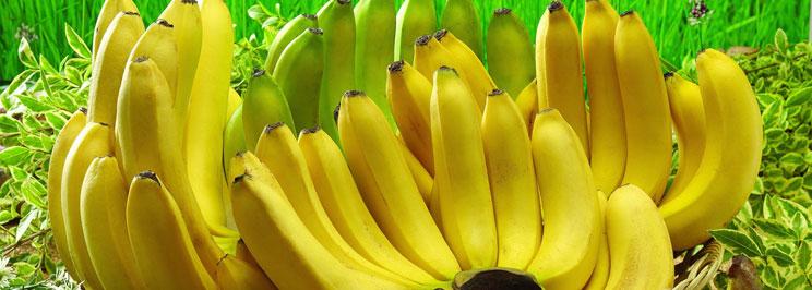 bananerfokus