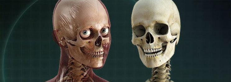 skelettfokus