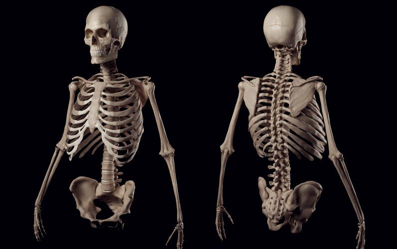 10 fakta du antagligen inte visste om ditt skelett