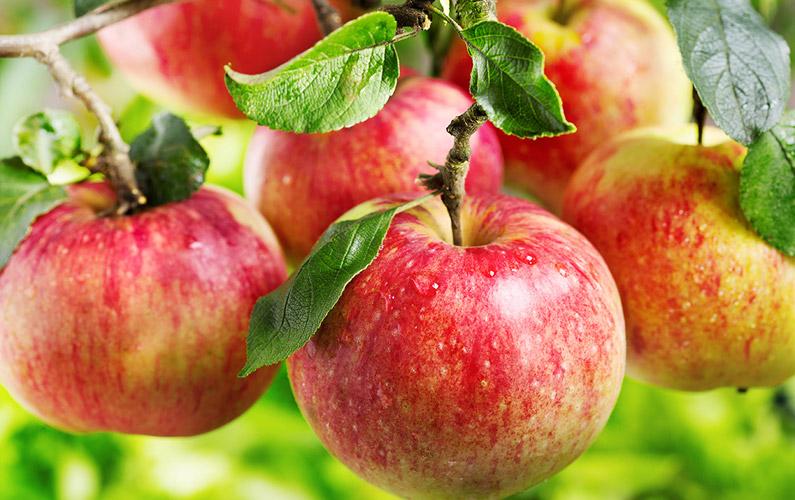 10 fakta du antagligen inte visste om äpplen