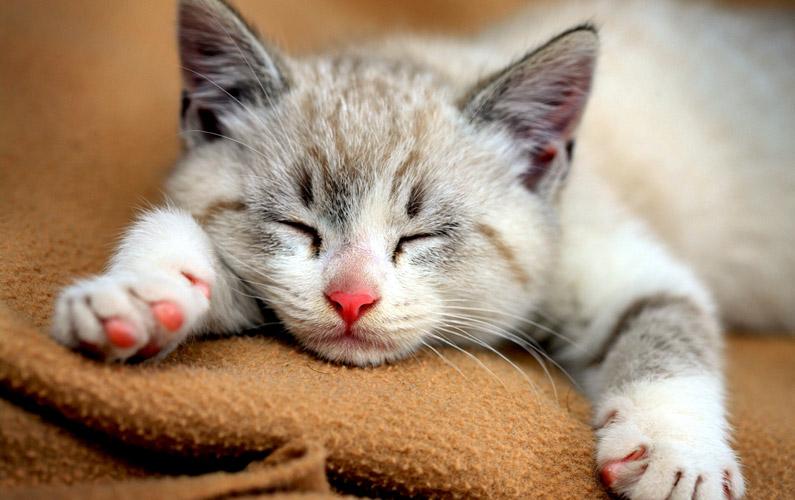 10 fakta du antagligen inte visste om katter (del 3)