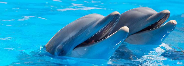delfiner1