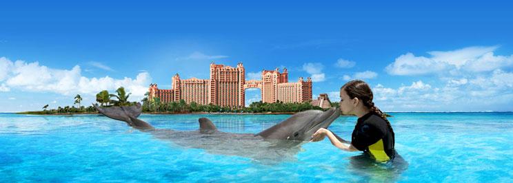 delfiner2
