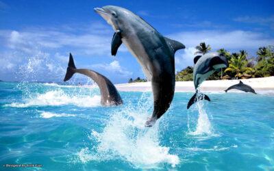 10 fakta du antagligen inte visste om delfiner