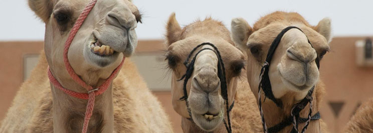 kameler1