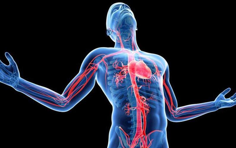 10 fakta du antagligen inte visste om din kropp (del 2)
