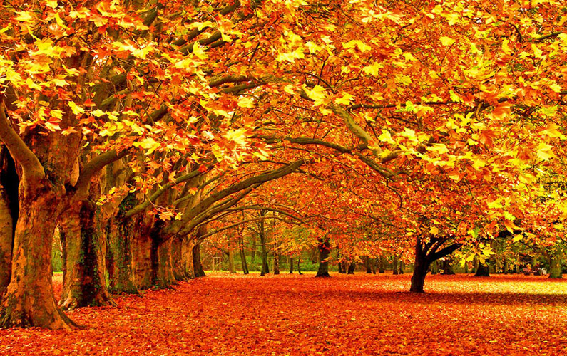 10 fakta du antagligen inte visste om hösten