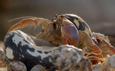 10 fakta du antagligen inte visste om krabbor