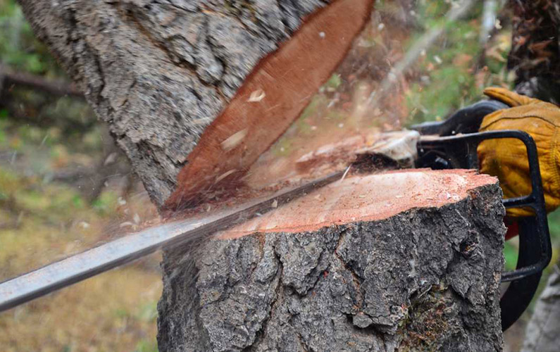 10 fakta du antagligen inte visste om skogsskövling