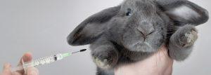 djurforsokfokus