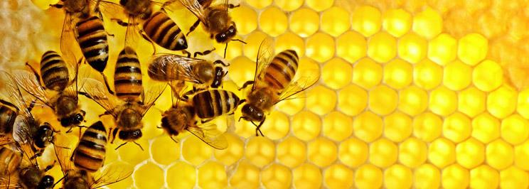 honung1