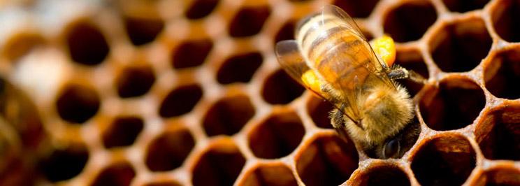 honung2