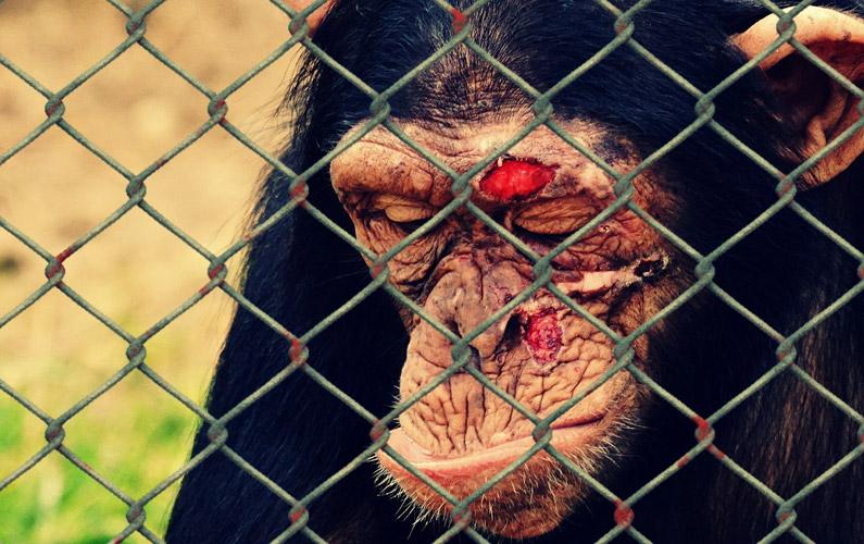 10 fakta du antagligen inte visste om djurplågeri