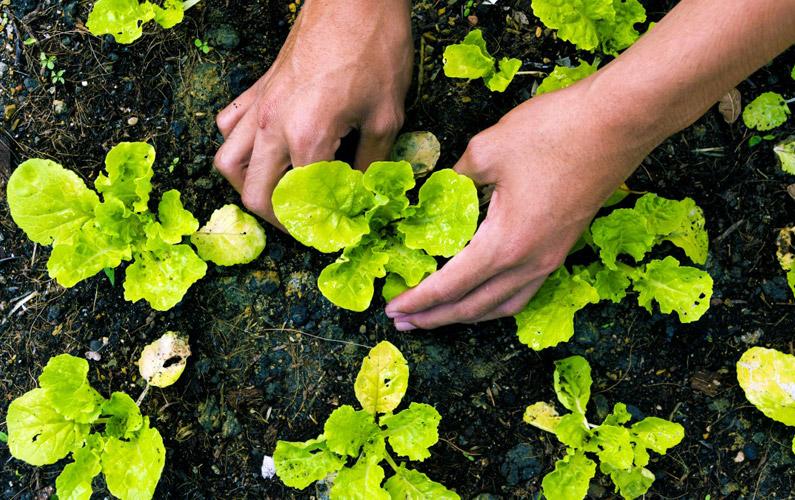 10 fakta du antagligen inte visste om organisk mat