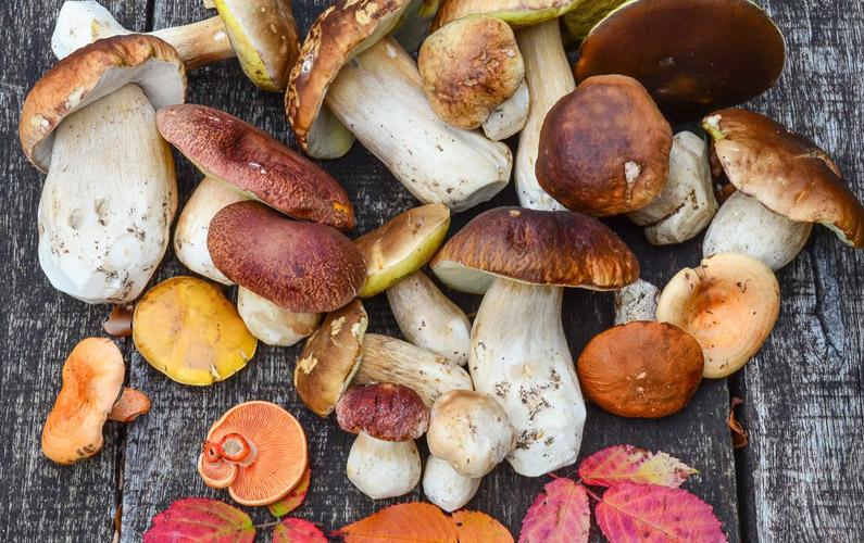 10 fakta du antagligen inte visste om svamp