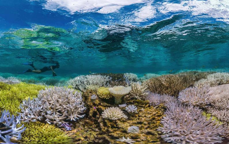 10 fakta du antagligen inte visste om koraller