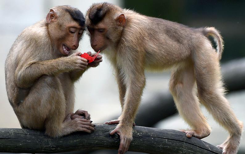 10 fakta du antagligen inte visste om apor