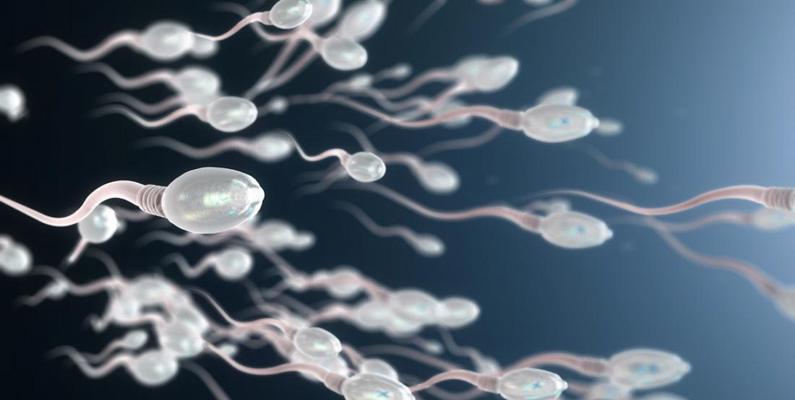 En spermier kan leva i upp till fem dagar. Detta är dock ingenting mot fladdermusens spermier, som kan leva i upp till 145 dagar!