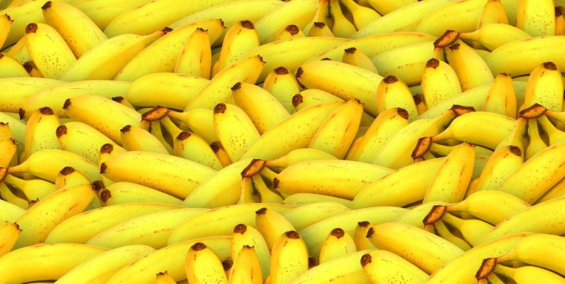 Cirka 100 miljarder bananer konsumeras världen över årligen här på vår planet.