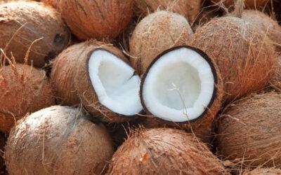 10 fakta du antagligen inte visste om kokosnötter