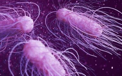 10 fakta du antagligen inte visste om salmonella