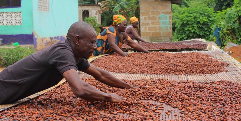 Ghana var tidigare ett riktigt gruvland, men när guldet tog slut började man istället att satsa på kakaoplantage. Idag står kakaon för 80% av landets totala ekonomi.