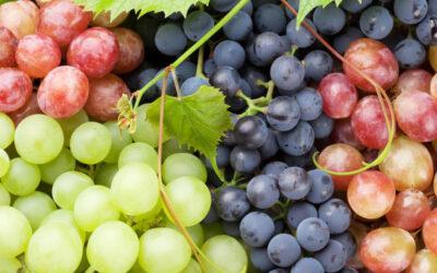 10 fakta du antagligen inte visste om druvor