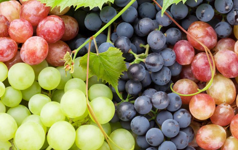 Druvor är frukten hos flertalet arter i familjen vinväxter (Vitaceae), och i synnerhet vinsläktet (Vitis). Används ofta till vinproduktion.