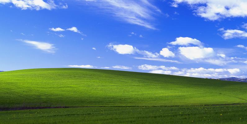 Den berömda Windows XP-bakgrundsbilden var bara möjlig på grund av ett insektsangrepp som tog död på alla druvplantor som skulle ha varit i området.